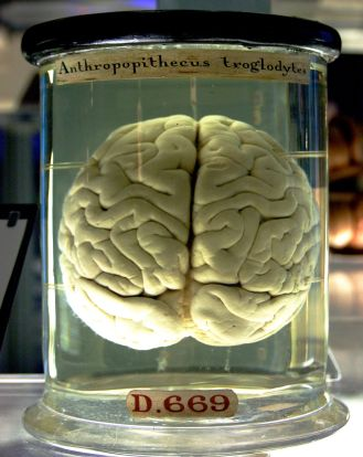 1200px-Chimp_Brain_in_a_jar