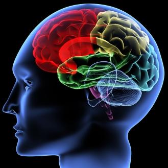 bigstock_Brain_28191694