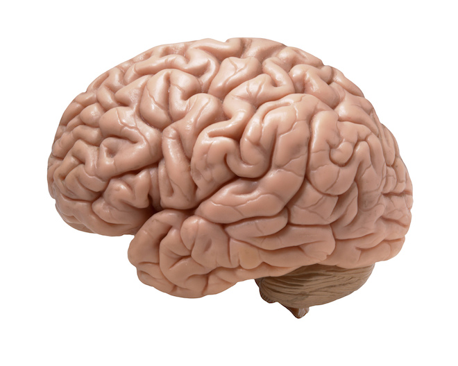 brain1 (1)