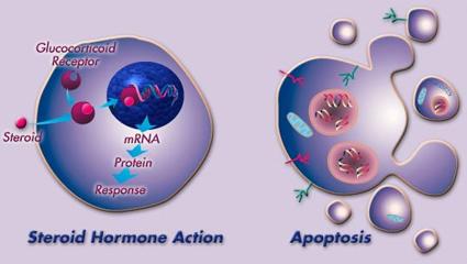 molecular2jpg.jpg