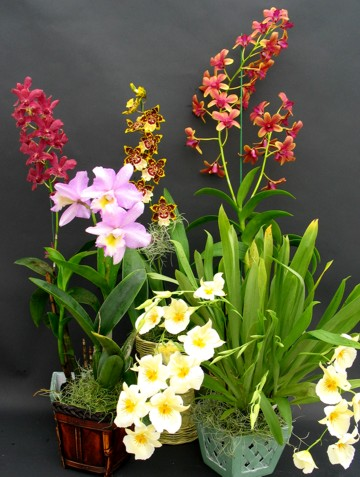 orchid_care