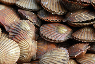 shellfish01.jpg