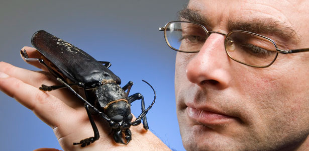 The-biggest-bug-in-the-world-Titan-beetle