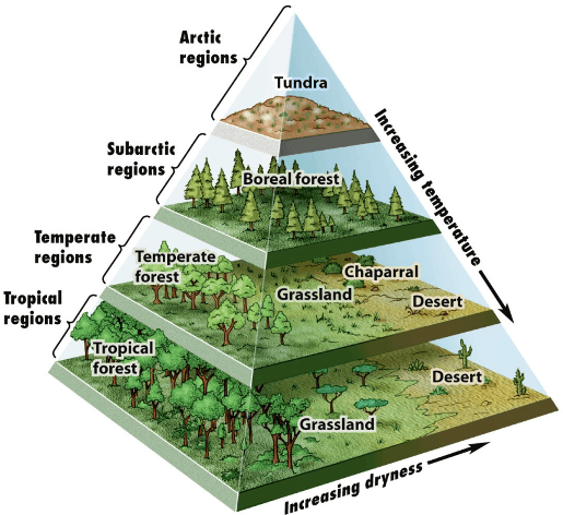 FORESTS-ECOSYSTEM