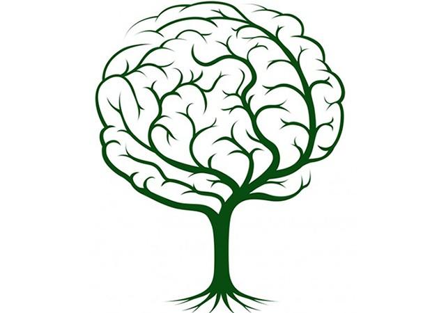 brainplant-640x450