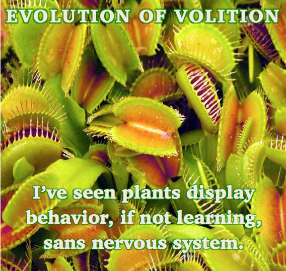 Evolution of Volition