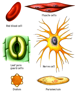 cell function